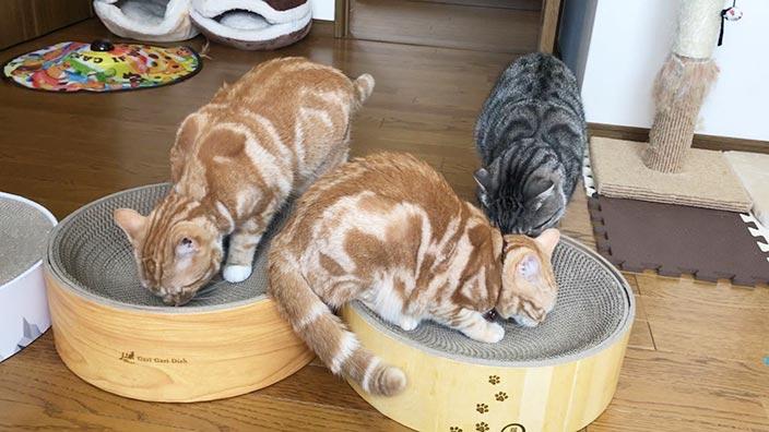 ミュー (mju) ガリガリディッシュスクラッチャー_またたびパウダーで猫がくいつく