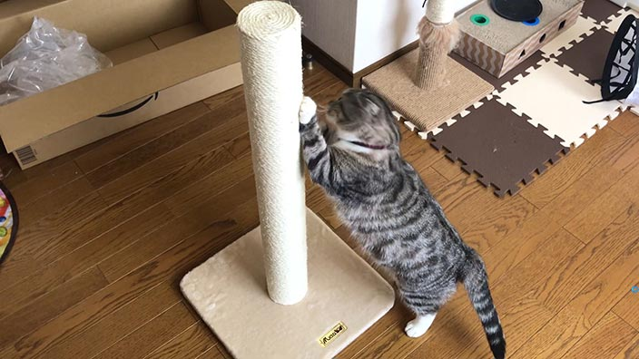 Mau_爪とぎ_キャットポール_大きな猫でも背伸びして爪がとげる
