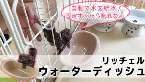 【リッチェル ウォーターディッシュ レビュー】倒れて水がこぼれる心配がない猫用ケージに設置できるウォーターディッシュ【動画あり】