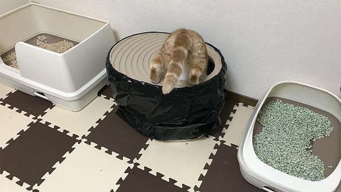 おすすめな猫トイレの選び方