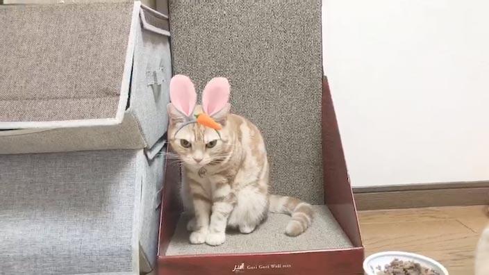 ハロウィンはかわいい仮装をした猫ちゃんとハッピーに過ごしましょう♪