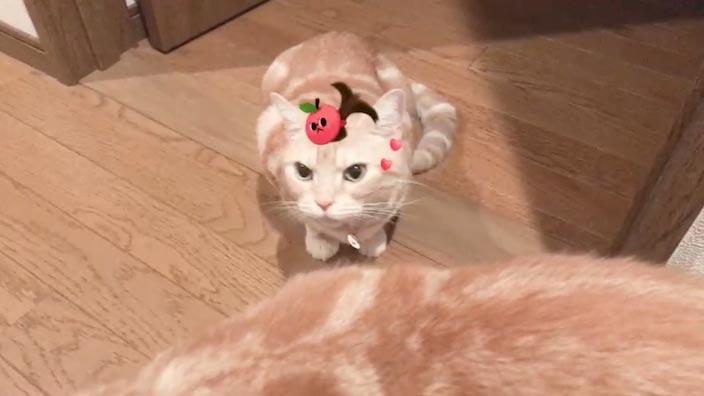 【ハロウィン】猫ちゃん特集|話題になったインスタやTwitterの投稿まとめ