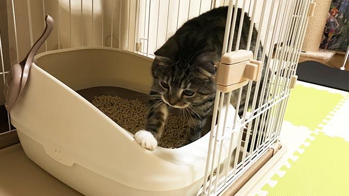 あなたの猫ちゃんのお気に入りのトイレを見つけて快適な暮らしを始めましょう♪