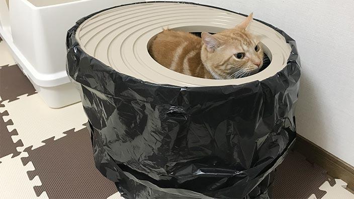 猫トイレに関するよくある質問と回答