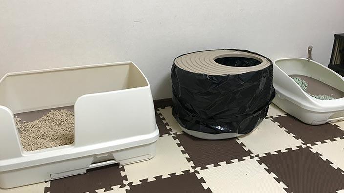 初心者さん向けの猫トイレ解説
