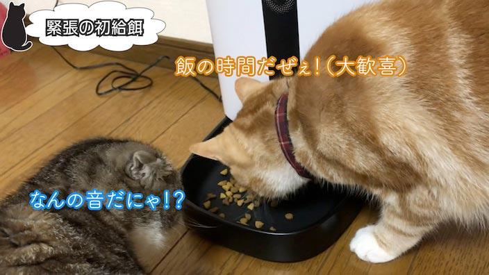 留守がちな方はカメラ付き自動給餌器を買って猫ちゃんを見守ってあげましょう
