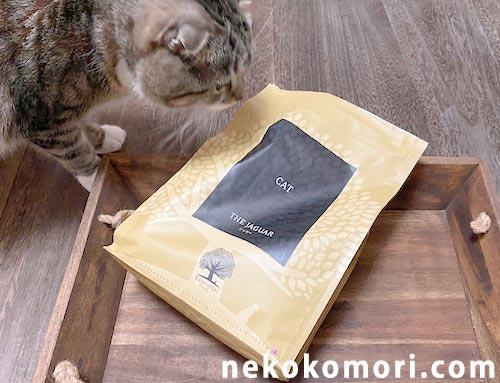 美味しそうなジャガーキャットフードの匂いに釣られてしまう猫