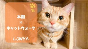 LOWYA(ロウヤ)キャットウォーク付き本棚で楽しそうに遊ぶ猫