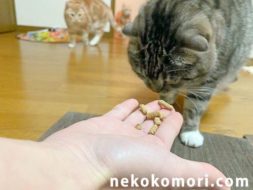 レガリエの匂いにつられて行列を作る猫たちの写真