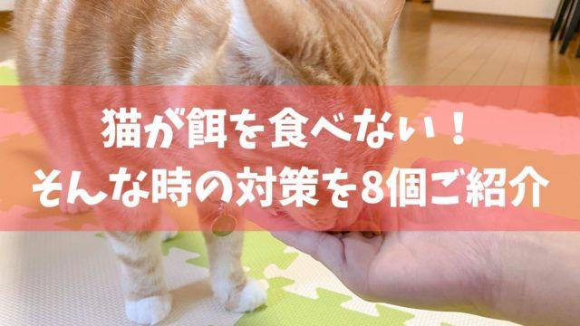 猫が餌を食べない時の原因と対策8選|何日まで様子見して大丈夫?