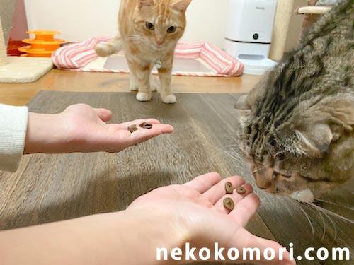 ジャガーキャットフードの匂いを警戒しながらも近づいてくる猫たちの写真