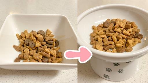 猫の食器を変える写真