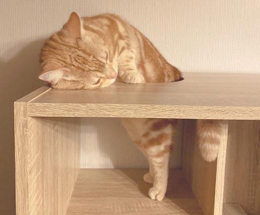 LOWYA(ロウヤ)キャットウォーク付き壁面本棚の口コミレビュー_本棚で遊ぶ猫たちの写真2