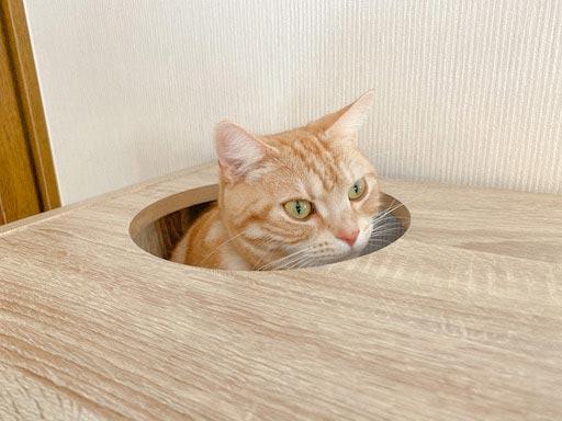 LOWYA(ロウヤ)キャットウォーク付き壁面本棚の口コミレビュー_本棚で遊ぶ猫たちの写真1