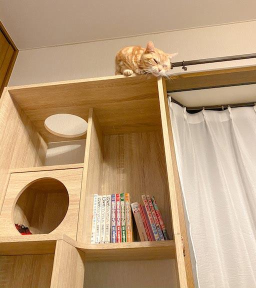 LOWYA(ロウヤ)キャットウォーク付き壁面本棚の口コミレビュー_本棚で遊ぶ猫たちの写真6
