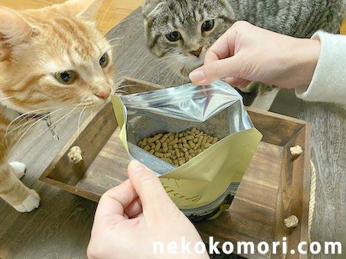 レガリエの匂いにつられてよってきた猫たちの写真