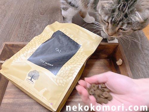 ジャガーキャットフードの撮影中に邪魔してくる猫の写真