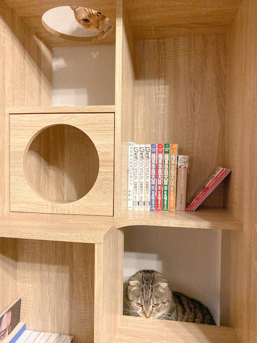 LOWYA(ロウヤ)キャットウォーク付き壁面本棚の口コミレビュー_本棚で遊ぶ猫たちの写真16