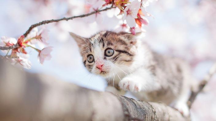 かわいい子猫の写真