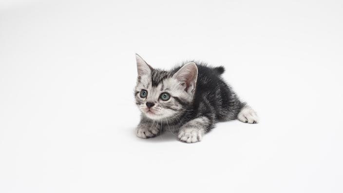生後12週までの子猫の餌の正しい与え方・量・回数・時間