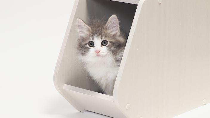 生後7ヶ月から1年の子猫の餌の正しい与え方・量・回数・時間